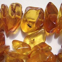 Prehistoric Amber Lovers Traded the Gem Through a Vast Mediterranean Network, Scientists Claim